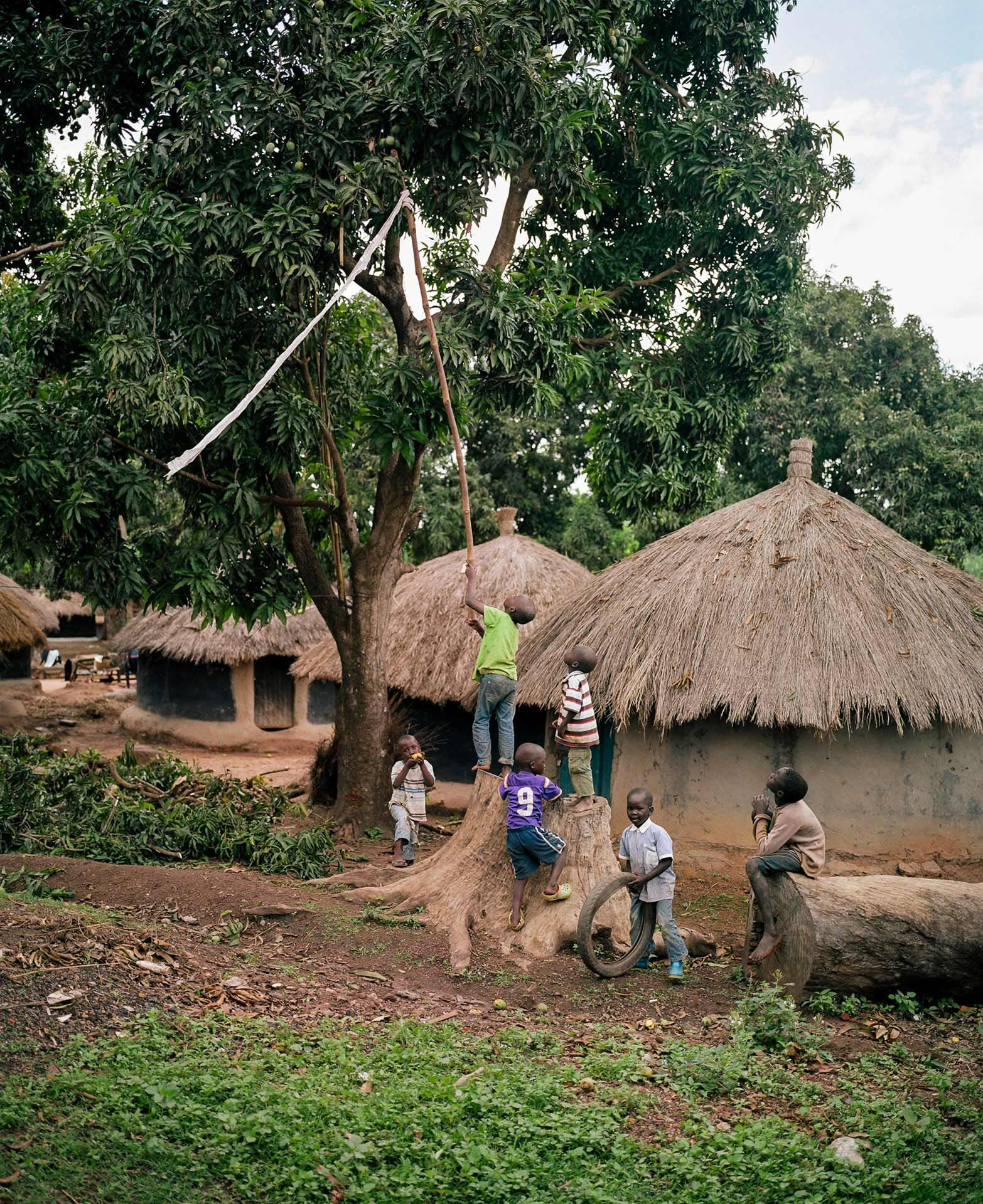 little black boys using a perch with a net to gather mangos from trees by Alexi Hobbs in Uganda for Football for Good with Sportsnet