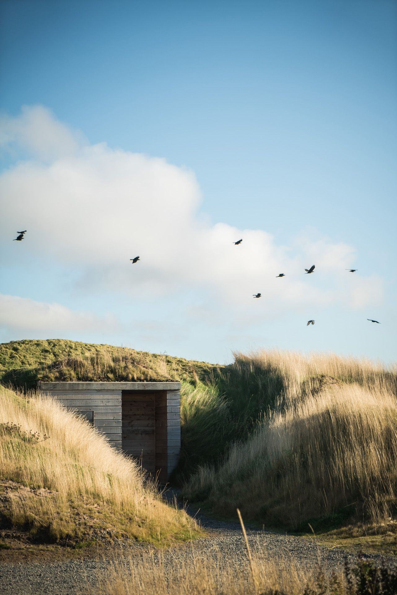 seaside wooden cabin surrounded by high grass by Bruno Florin for Mercedes Magazine
