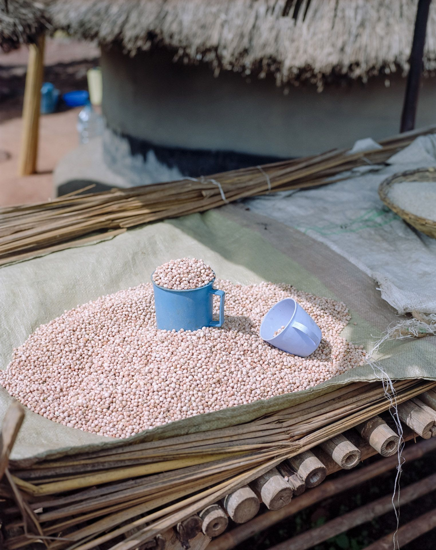 dry grains on tarp with measuring cups by Alexi Hobbs in Uganda for Football for good with Sportsnet