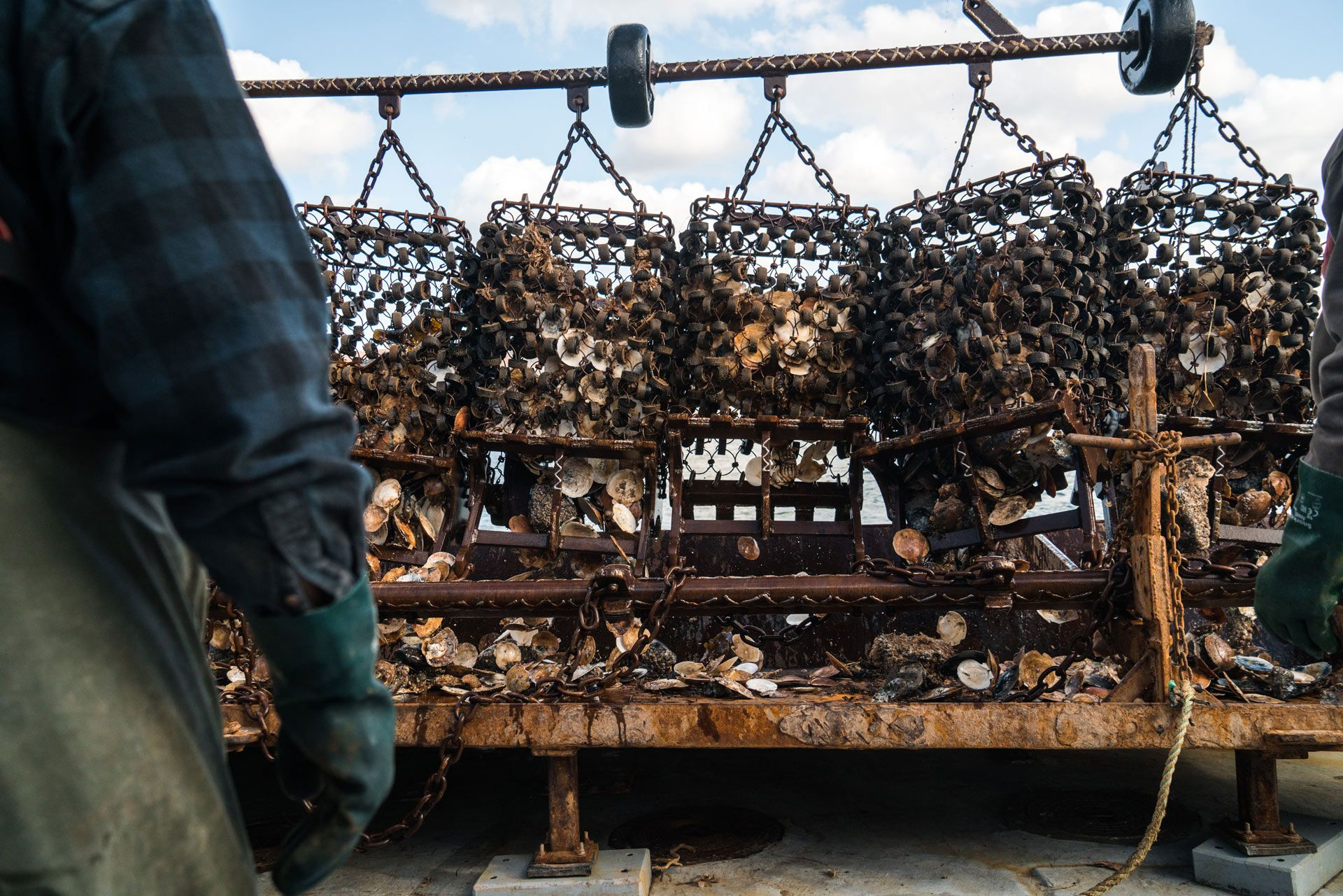 metal baskets full of freshly caught scallops by Bruno Florin for Ricardo Magazine in Bay of Fundy
