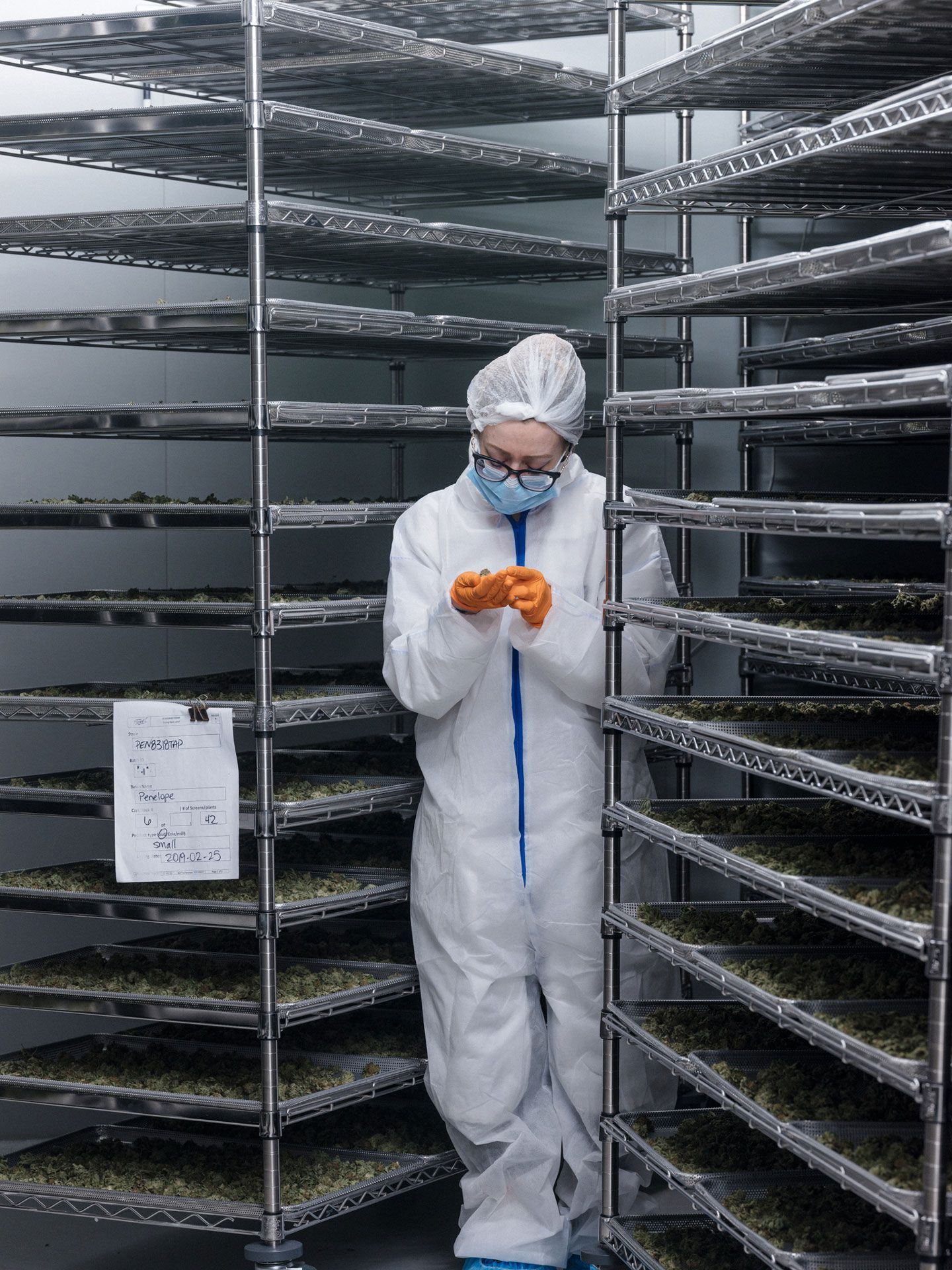 employee examining weed heads in between drying racks in coverall suit by Alexi Hobbs at Tweed HQ for Bloomberg Businessweek