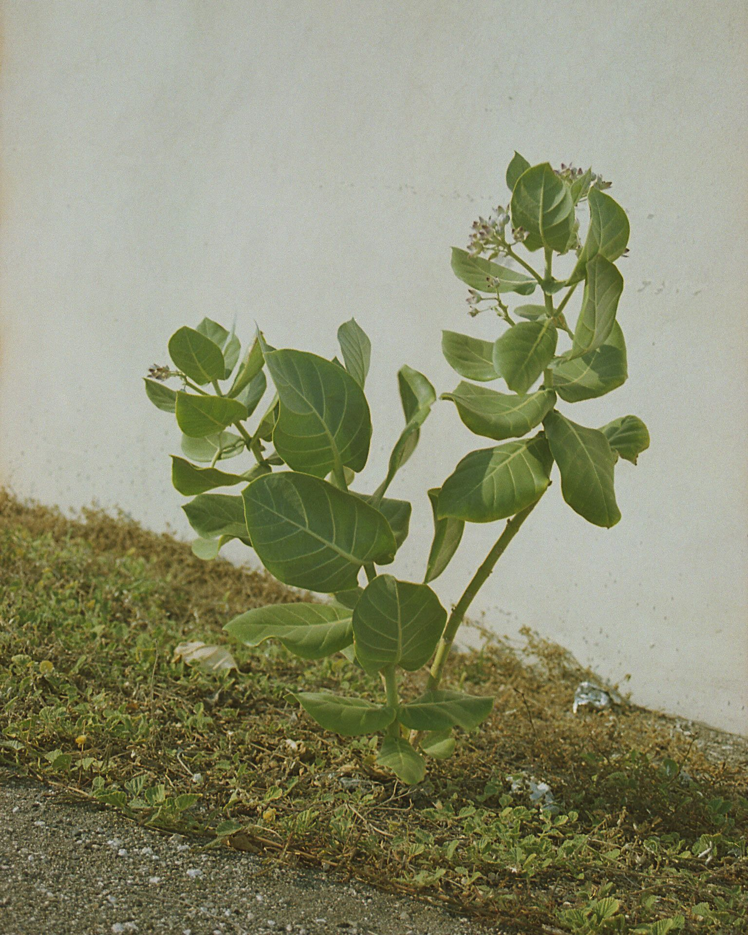 picture of plant on the side of the road by Oumayma B Tanfous in Jamaica