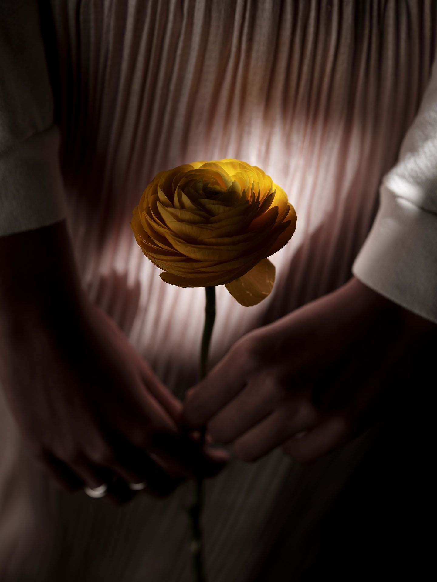 woman of colour model Anaïs holding a yellow rose illuminated by a ray of sun for the spring-summer collection of Swell & Ginger by Guillaume Simoneau