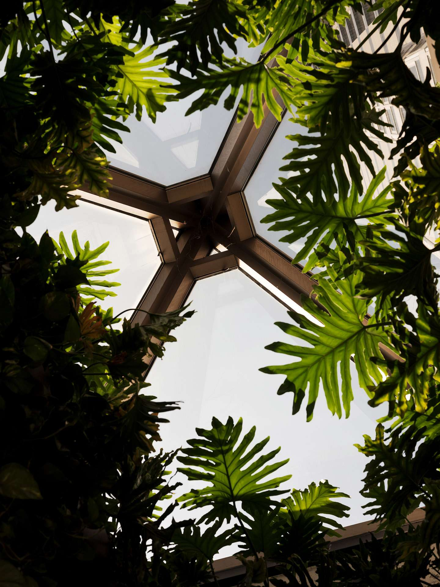glass roof with plants coming up to get light by Guillaume Simoneau at MRDK for NUVO