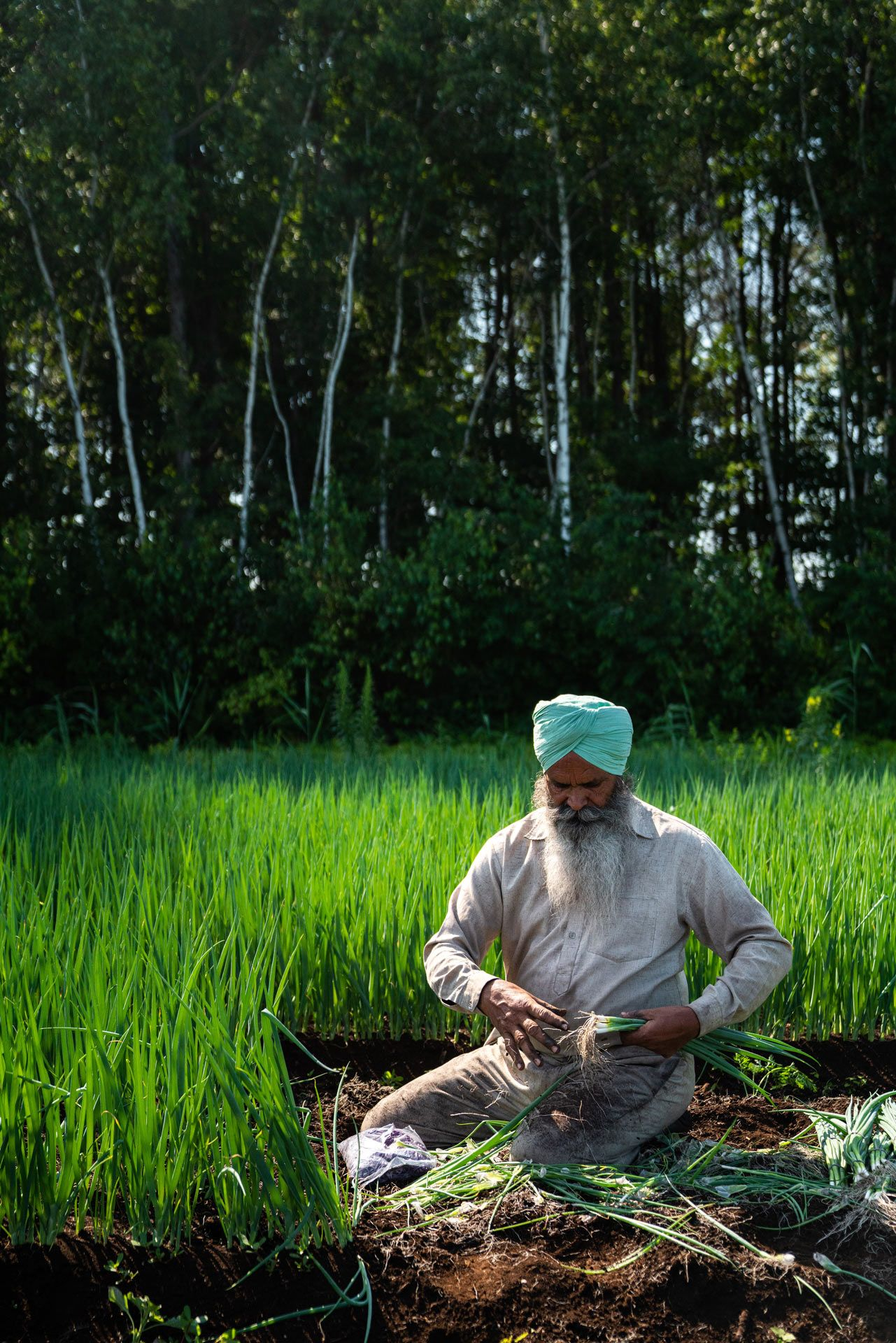 indian farm worker sitting in field harvesting green onions by Bruno Florin for Sollio Agriculture