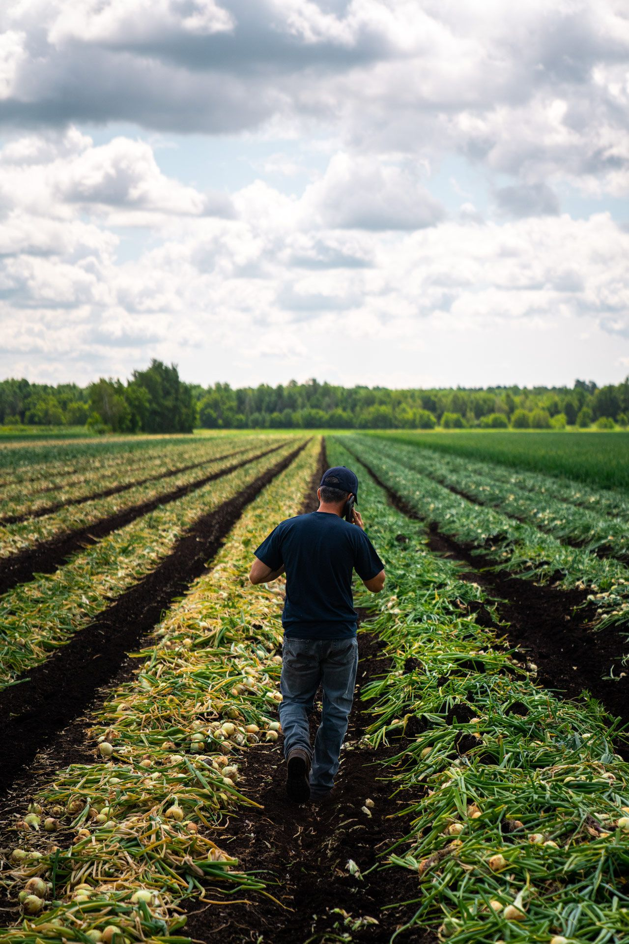 worker on the phone walking in between rows of garlic by Bruno Florin for Sollio Agriculture