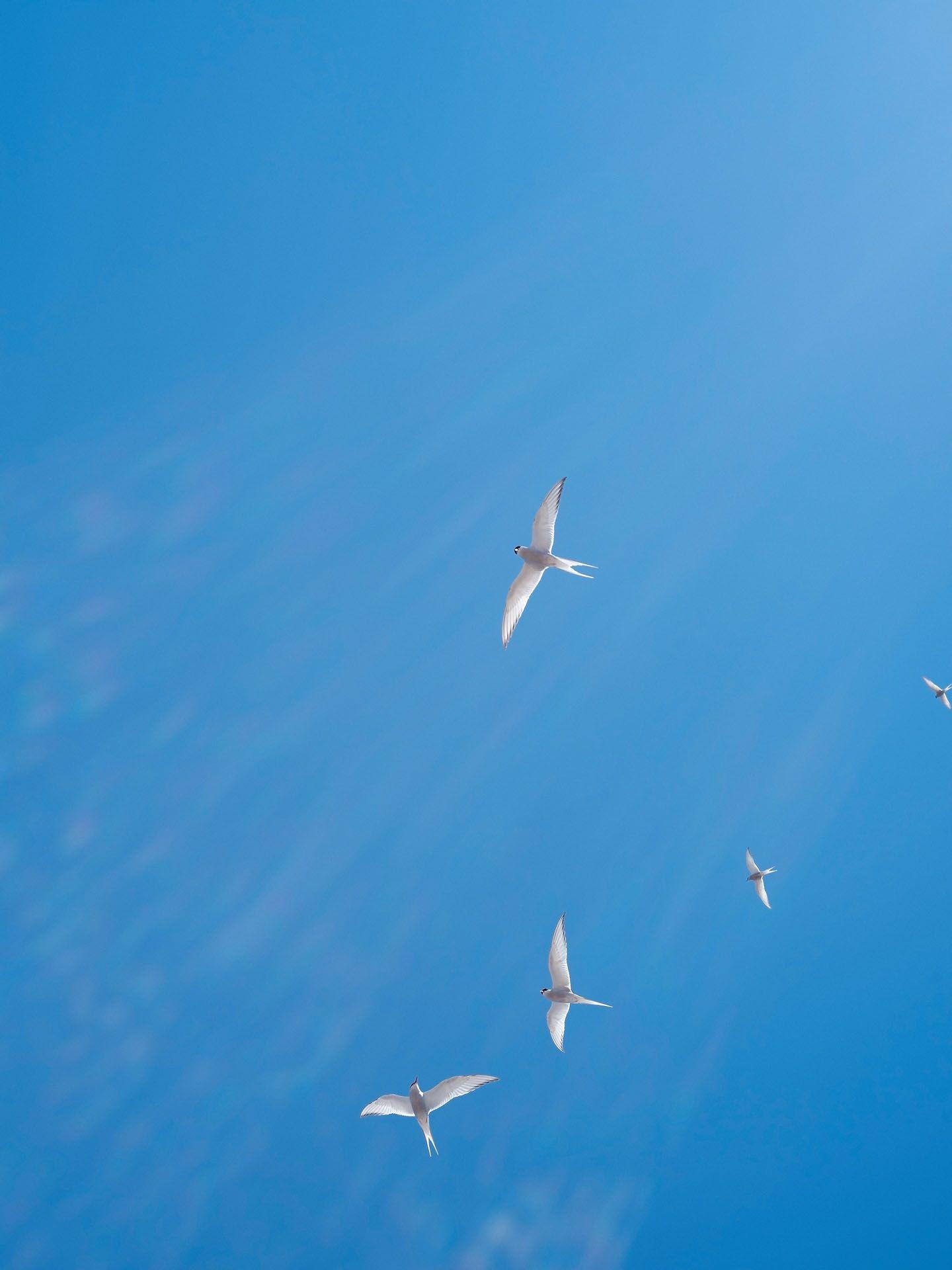 white birds flying in blue sky by Guillaume Simoneau in Saint-Pierre-et-Miquelon for M le mag Le Monde