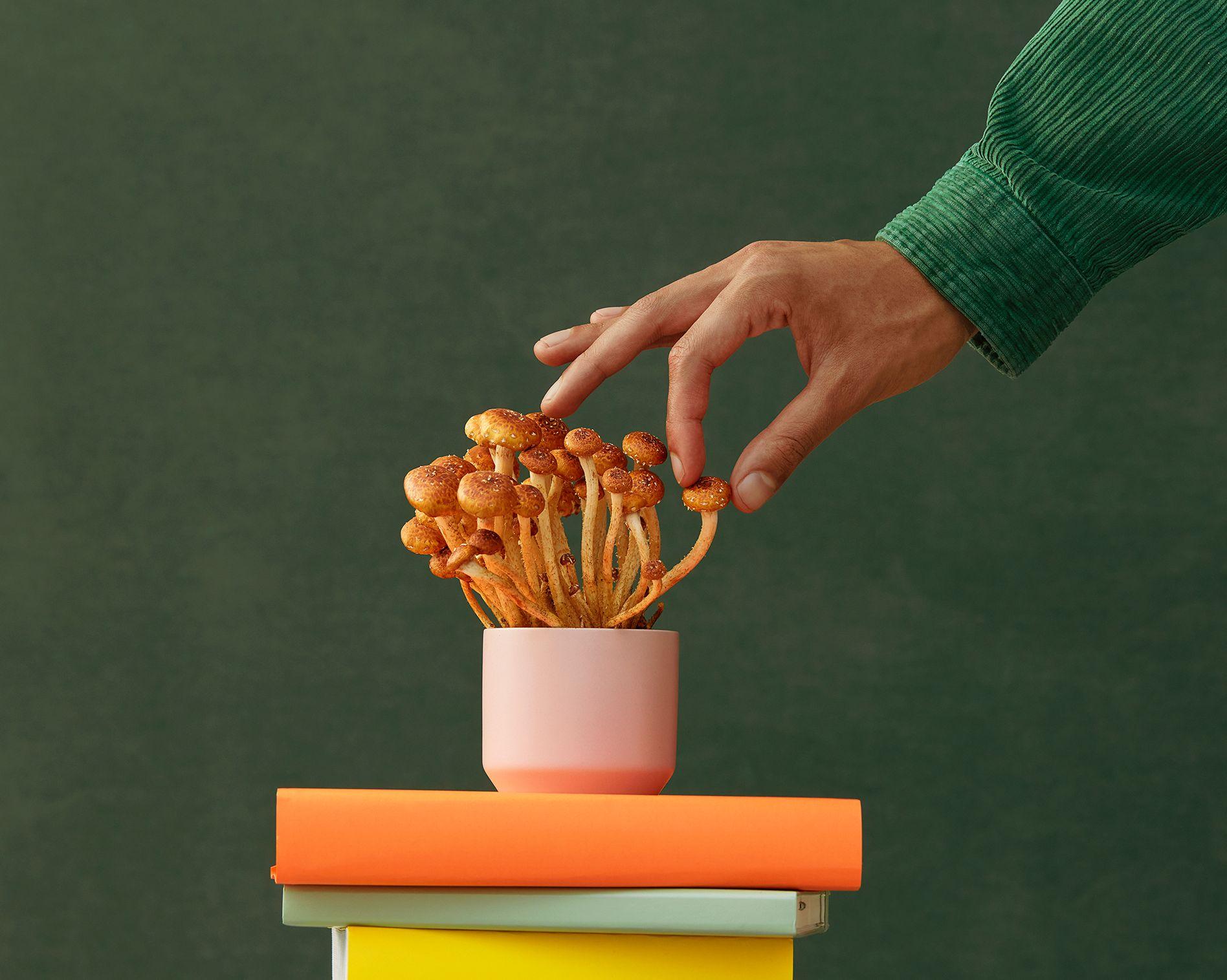 main tenant un champignon au-dessus pile de livres sur fond vert