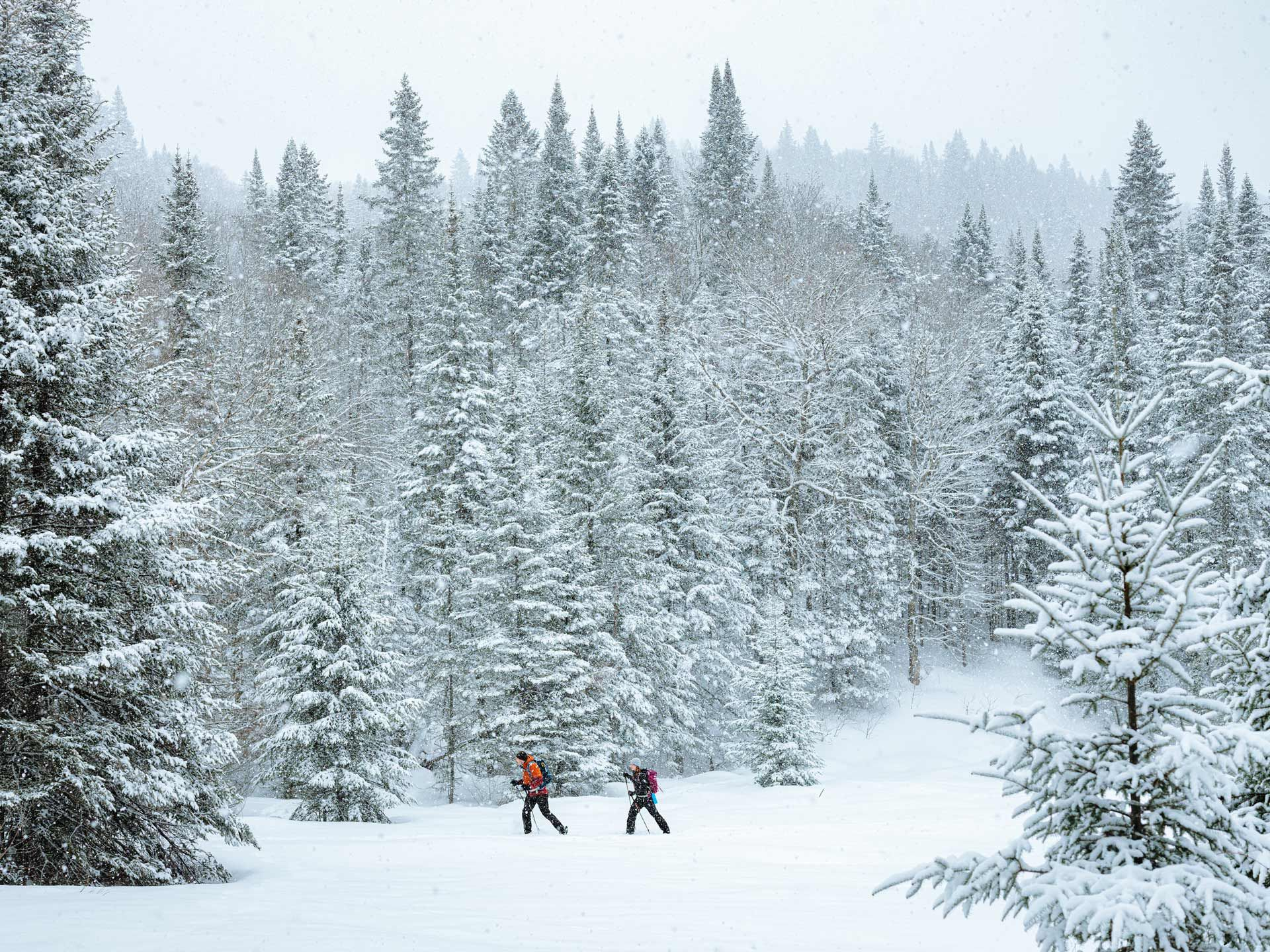 Sail sports gear photographed by Alexi Hobbs of two people cross-country skiing in between tall pine trees in the snow