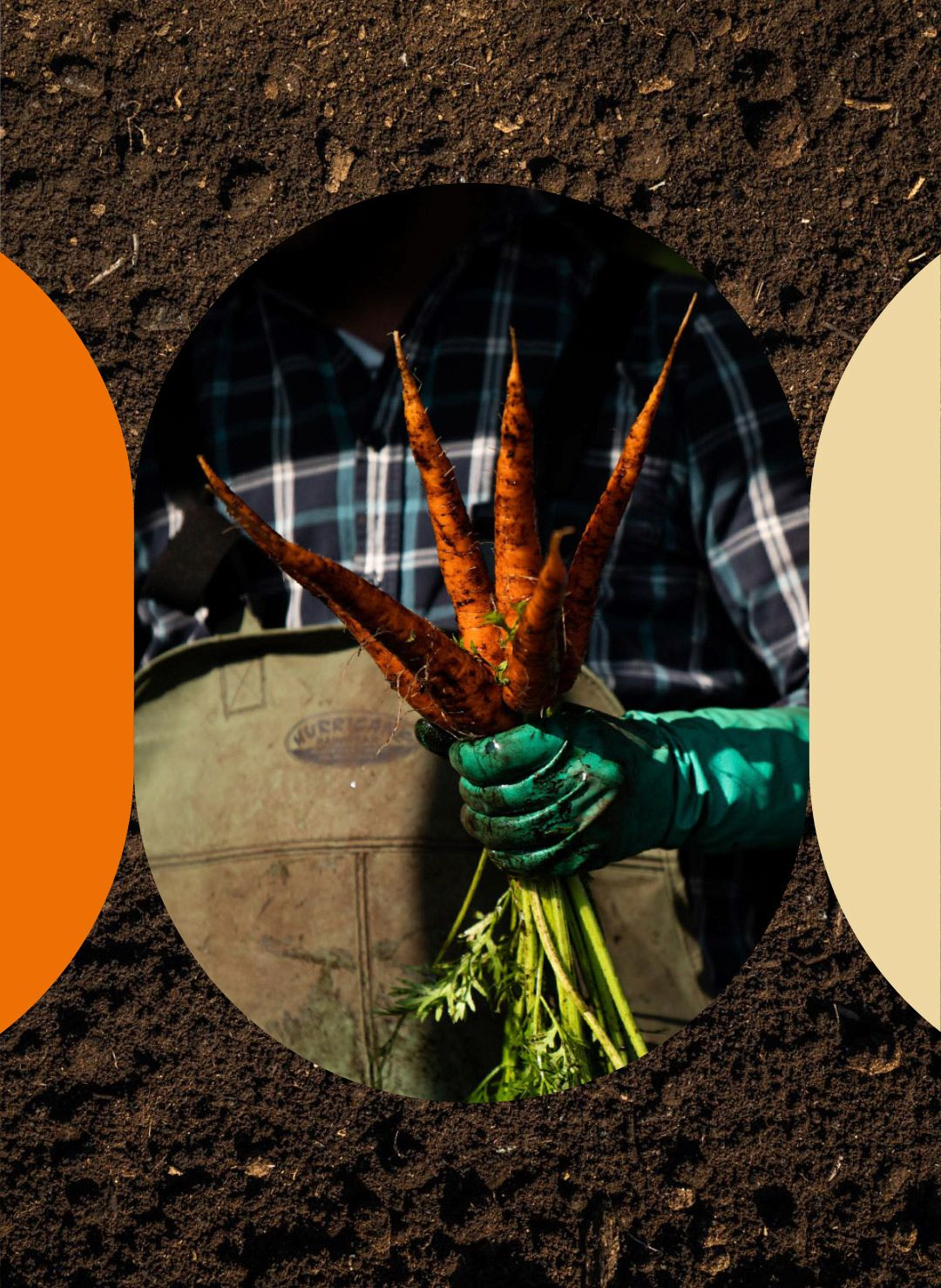 montage of farm worker holding bunch of carrots fresh from the earth over picture of dirt by Bruno Florin for Sollio Agriculture